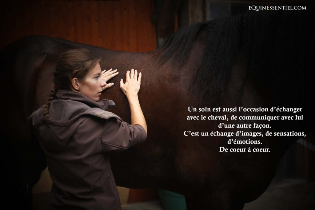 communication-animale-intuitive-chevaux-animaux-telepathie-echange-equinessentiel-laure-souquet