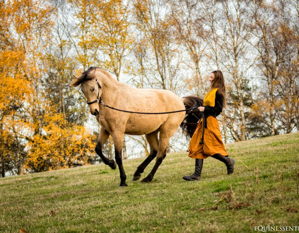 Sans friandise, comment motiver son cheval ?